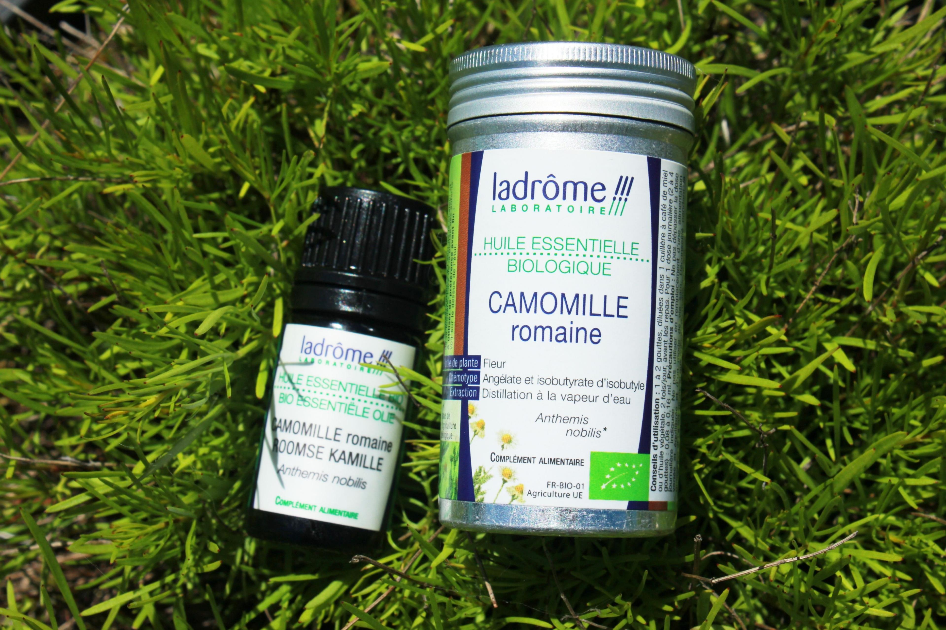 Camomille Romaine Ladrôme